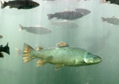 DC Booth Historic Fish Hatchery