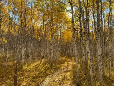 Spearfish Canyon Fall Colors